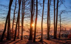 Факты о лесе