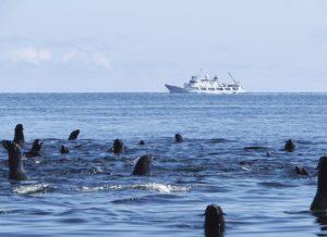 Факты о Беринговом море