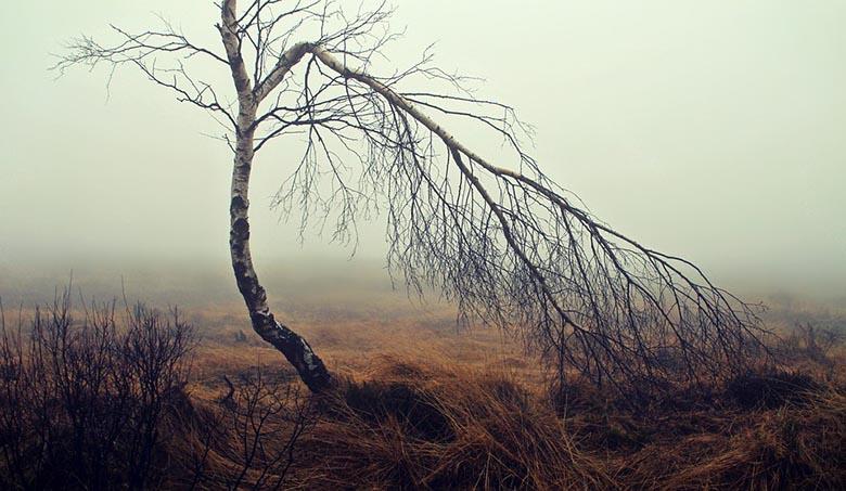 Факты о болотах