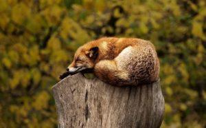 Факты о диких животных