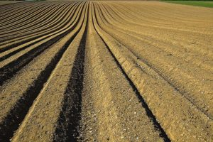 Факты о почве