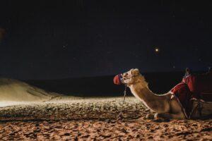 Факты о верблюдах