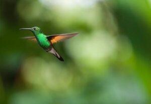 Факты о колибри