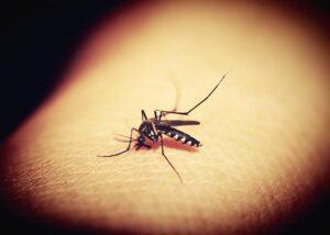 Факты о комарах