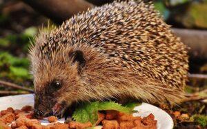 Факты о питании животных