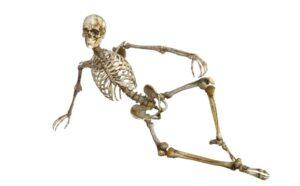 Факты о скелете