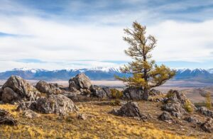 Факты об Алтайских горах