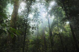 Факты об экваториальных лесах