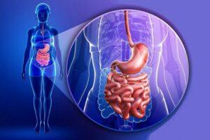 Факты о пищеварительной системе