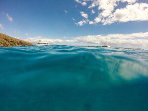 Органический мир Индийского океана