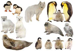 Животные холодных районов