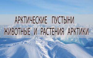 Животные и растения Арктики
